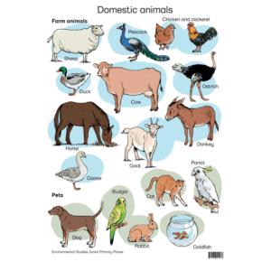 Domestic Animals - Poster