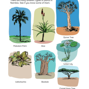 Plants Of Namibia - Poster